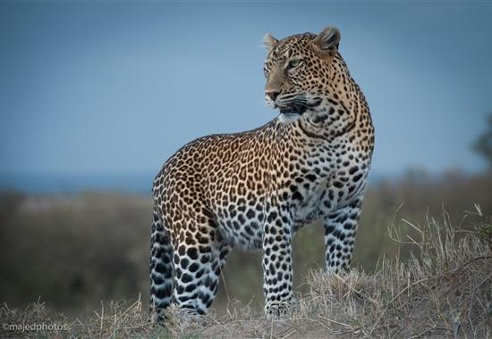 Velké safari - Keňa