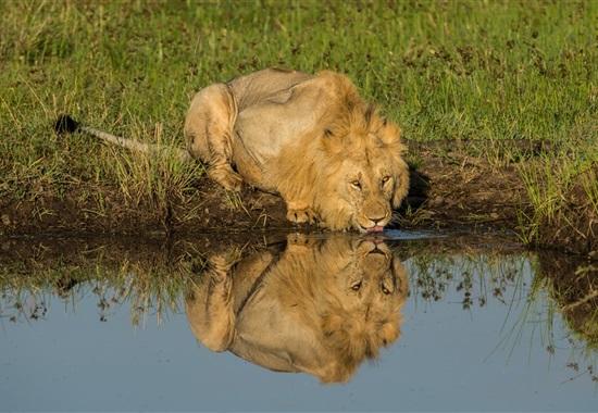 Safari s pobytem u moře - Keňa