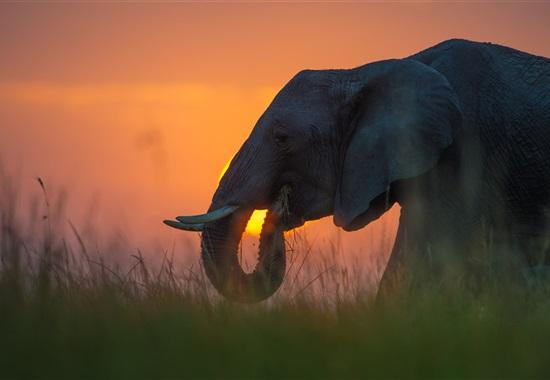 Národní park Tsavo s pobytem u moře - Keňa