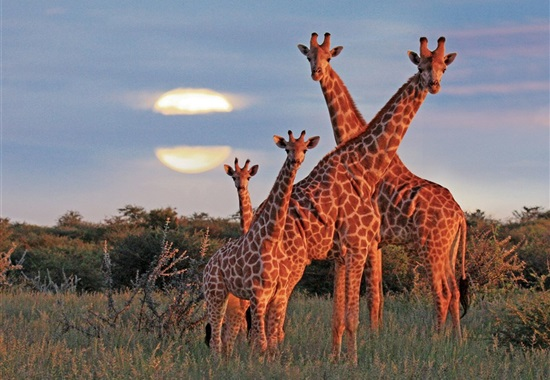 To nejlepší z Namibie - Namibie