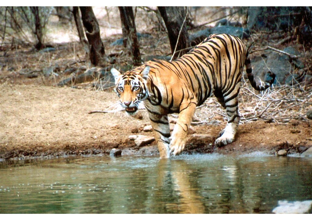 To nejlepší z Indie + tygři v Ranthambore - Indie