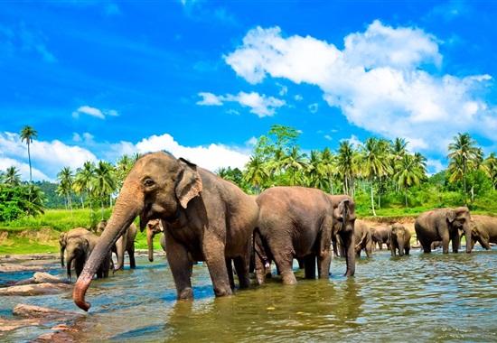 To nejlepší ze Srí Lanky s CZ průvodcem - Srí Lanka